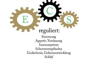 Das Endocannabinoid-System des Menschen